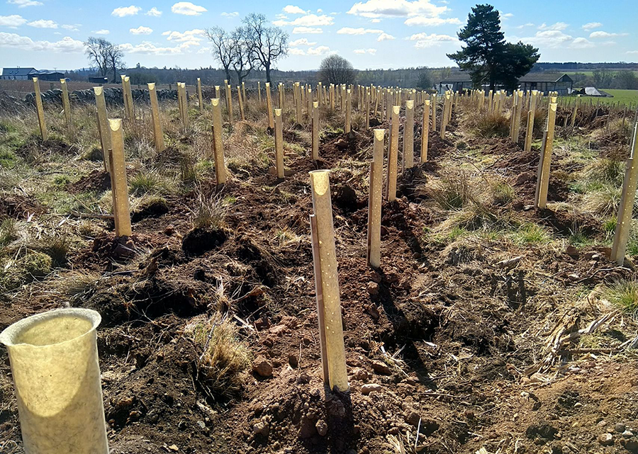 One of the first trial sites of NexGen Tree Shelters in Perth, Scotland